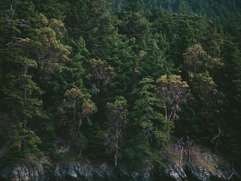 Park narodowy a krajobrazowy – czym się różnią?