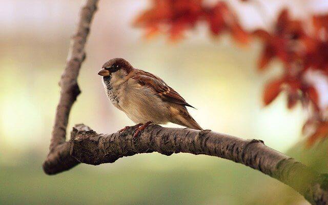 Ptaki w Babiogórskim Parku Narodowym